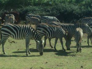 Symbolbild: Herde